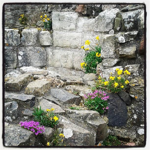 Flowers in the ruins